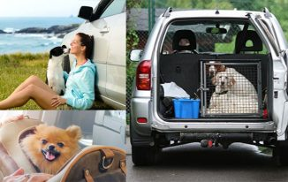 Traveling With Your Pet, Tips and Advice